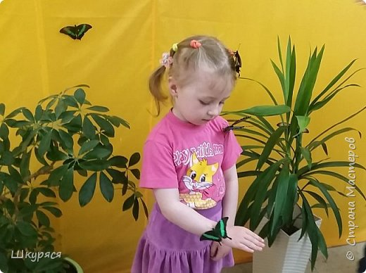 Вот такая красота к нам прилетела на о.Сахалин. Все бабочки рождены на нашем острове из привезенных куколок. После экскурсии мы узнали, что бабочки обжоры и могут сесть столько нектара, что не могут взлететь. фото 6