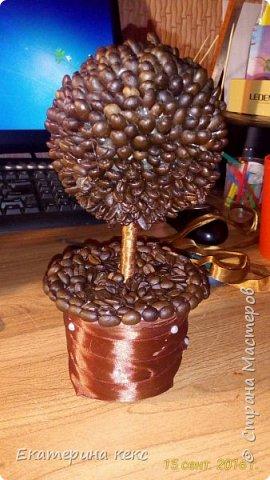 дерево из кофейных зёрен