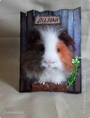 свин Лиман фото 3