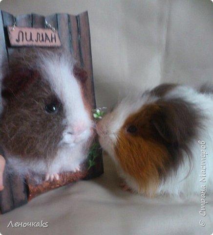 свин Лиман фото 4