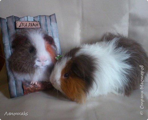 свин Лиман фото 5