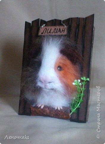 свин Лиман фото 2
