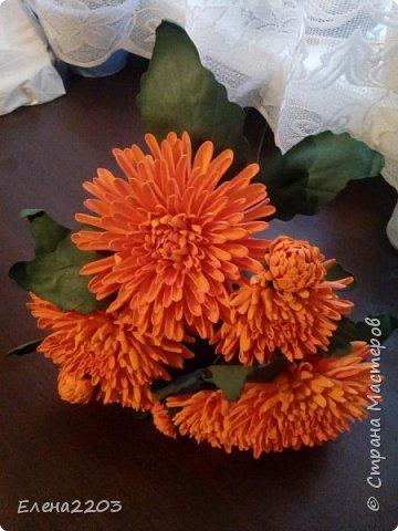 Хризантемы! фото 1
