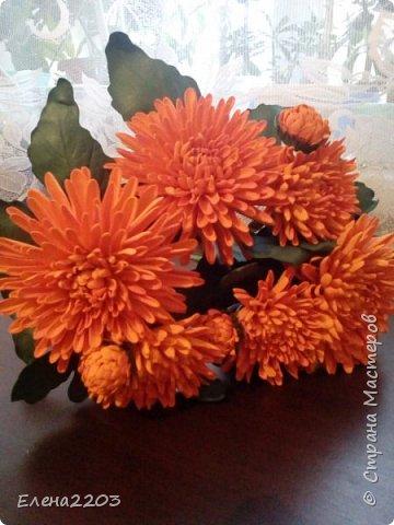 Хризантемы! фото 2