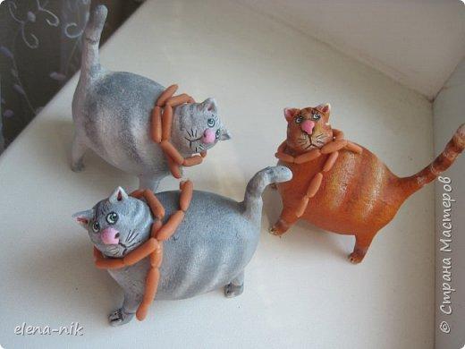 Принимайте новую партию котиков! фото 2