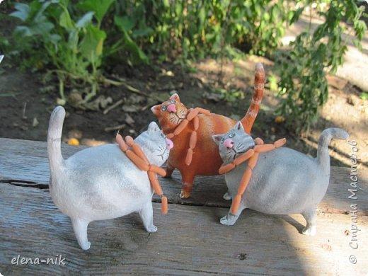 Принимайте новую партию котиков! фото 4