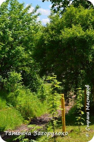 Приглашаем на прогулку в село Ыб Республики Коми фото 16