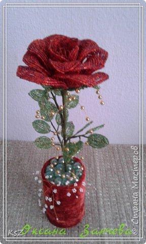 Бархатная роза фото 2
