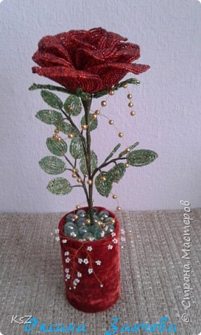 Бархатная роза фото 1