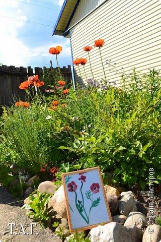 Великие живописцы черпают вдохновение от созерцания цветов - прекрасных творений природы. Внук как настоящий художник, сам смотрит и кошке показывает. фото 12