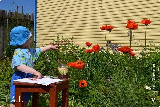 Великие живописцы черпают вдохновение от созерцания цветов - прекрасных творений природы. Внук как настоящий художник, сам смотрит и кошке показывает. фото 6