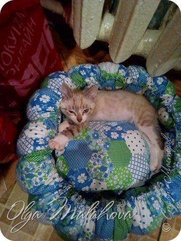 Лежаночка для кошки фото 5