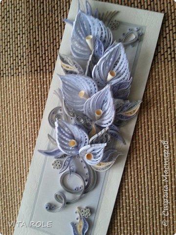 Цветы каллы. фото 1