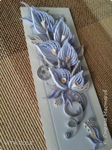 Цветы каллы. фото 2