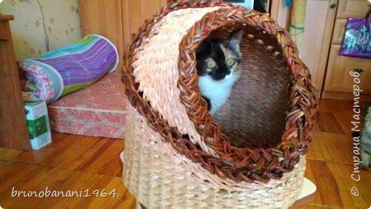 Кошкиного дом фото 1