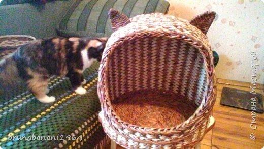 Кошкиного дом фото 2