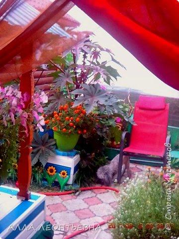 Вот и лето к концу ...а было ли оно?!    так редко приходится посидеть под пальмой в кресле качалке!  повседневные заботы,как ритуал... фото 1