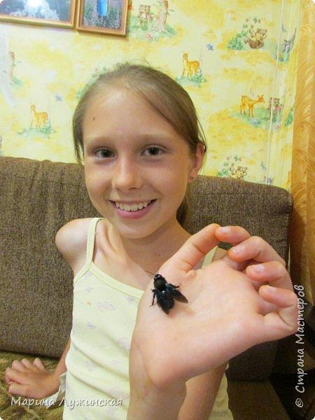 Я безумно радуюсь тому, что мои дети научились замечать окружающий их живой и красивый мир! Мир животных, мир растений и мир насекомых! Вот о нашем  мире насекомых, который мы с большим интересом начинаем изучать, я бы хотела сегодня рассказать...  Изучаем как?  - просто присмотримся, если удастся сфотографировать, сфотографируем, а потом придём домой и давай искать информацию...А бывает и такое, что возьмём домой таракашечку-букашечку... Ухаживаем за ней , кормим, наблюдаем, а потом отпускаем... А бывает и такое, что даже привыкнем к этому насекомышу, отпускаем на волю, а сами рыдаем...   фото 34