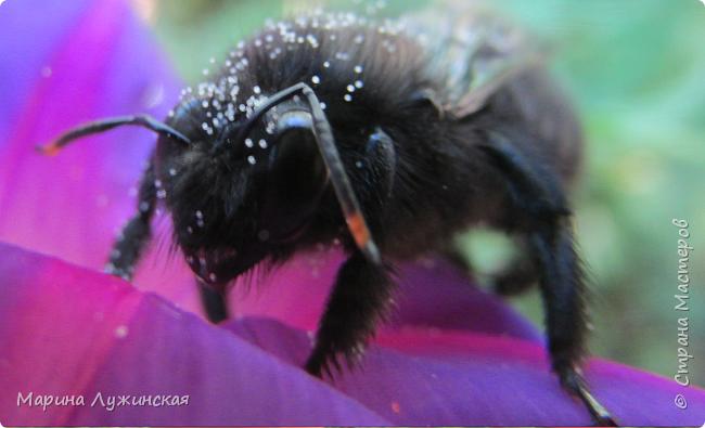 Я безумно радуюсь тому, что мои дети научились замечать окружающий их живой и красивый мир! Мир животных, мир растений и мир насекомых! Вот о нашем  мире насекомых, который мы с большим интересом начинаем изучать, я бы хотела сегодня рассказать...  Изучаем как?  - просто присмотримся, если удастся сфотографировать, сфотографируем, а потом придём домой и давай искать информацию...А бывает и такое, что возьмём домой таракашечку-букашечку... Ухаживаем за ней , кормим, наблюдаем, а потом отпускаем... А бывает и такое, что даже привыкнем к этому насекомышу, отпускаем на волю, а сами рыдаем...   фото 37