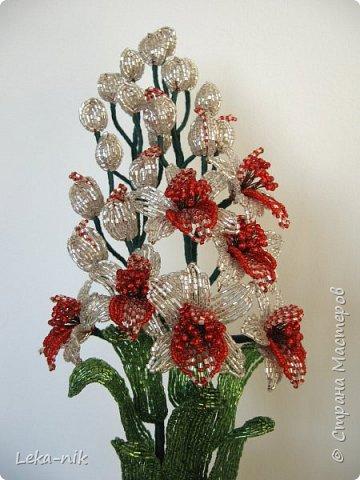 орхидеи фото 4