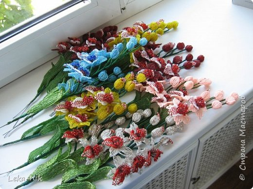 орхидеи фото 5