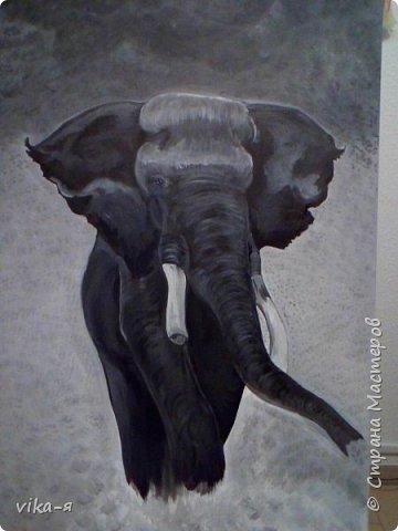 чёрный слон фото 1