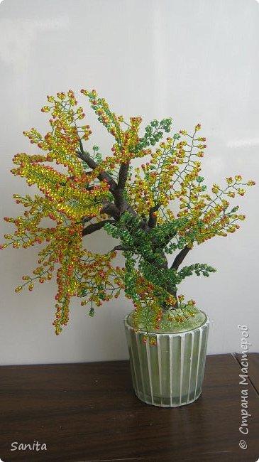 солнечные цвета деревья фото 1
