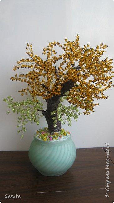 солнечные цвета деревья фото 2