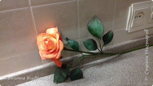Мои первые розы фото 2