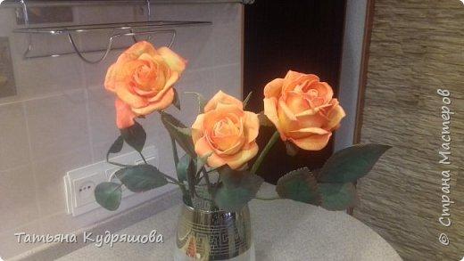 Мои первые розы фото 3