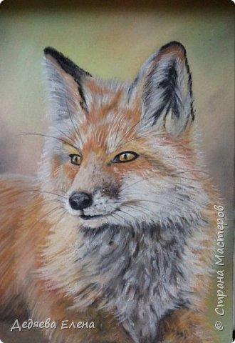 Продолжаю серию диких животных. Уж очень мне понравилось их рисовать сухой пастелью. фото 1