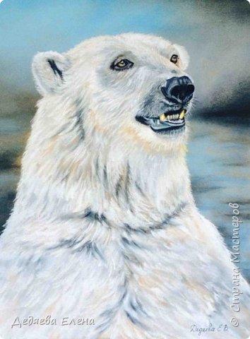 Продолжаю серию диких животных. Уж очень мне понравилось их рисовать сухой пастелью. фото 4