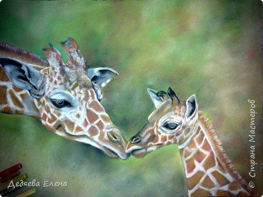 Продолжаю серию диких животных. Уж очень мне понравилось их рисовать сухой пастелью. фото 3
