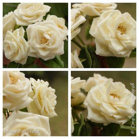 Привет всем жителям страны!!! Я сегодня к вам с плетистыми розами,которые всегда будут красивым дополнением в любом букете. И фото процесса прилагаю) фото 16