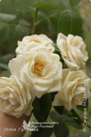 Привет всем жителям страны!!! Я сегодня к вам с плетистыми розами,которые всегда будут красивым дополнением в любом букете. И фото процесса прилагаю) фото 2