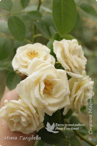 Привет всем жителям страны!!! Я сегодня к вам с плетистыми розами,которые всегда будут красивым дополнением в любом букете. И фото процесса прилагаю) фото 17