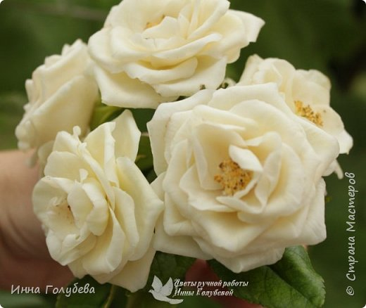 Привет всем жителям страны!!! Я сегодня к вам с плетистыми розами,которые всегда будут красивым дополнением в любом букете. И фото процесса прилагаю) фото 4