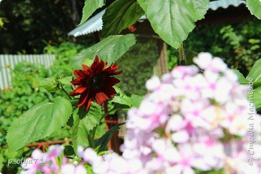 Здравствуйте!!!! И опять немного фотографий цветов)) фото 24