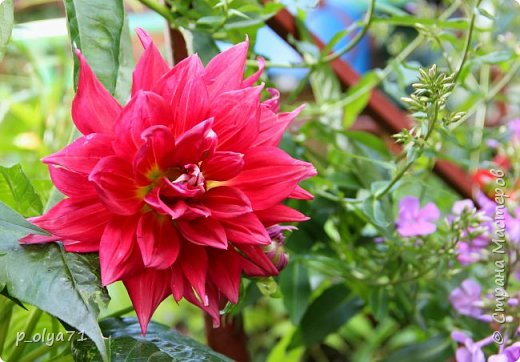 Здравствуйте!!!! И опять немного фотографий цветов)) фото 43