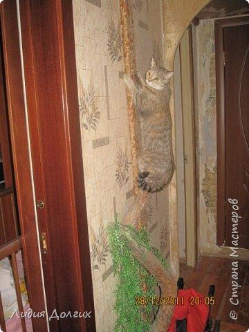 Когда-то привезли с дачи от друзей вот так изогнутый ствол старой яблони. Приделали его к стене в коридоре, думали сделать такое стилизованное дерево, но кошка решила, что это поставили ей тренажёр. Пришлось дополнить длинной доской, обтянутой материалом, оставшейся от старого дивана фото 2