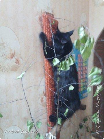 Когда-то привезли с дачи от друзей вот так изогнутый ствол старой яблони. Приделали его к стене в коридоре, думали сделать такое стилизованное дерево, но кошка решила, что это поставили ей тренажёр. Пришлось дополнить длинной доской, обтянутой материалом, оставшейся от старого дивана фото 3