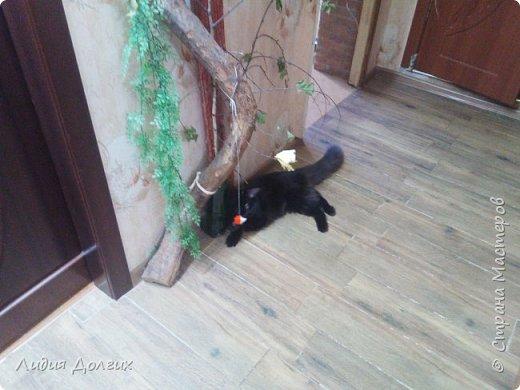 Когда-то привезли с дачи от друзей вот так изогнутый ствол старой яблони. Приделали его к стене в коридоре, думали сделать такое стилизованное дерево, но кошка решила, что это поставили ей тренажёр. Пришлось дополнить длинной доской, обтянутой материалом, оставшейся от старого дивана фото 8