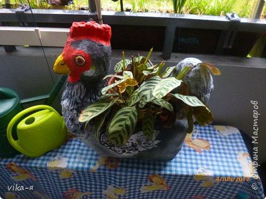 Подружка хотела вазу в сад в форме курицы, хотела купить, но не нашла нигде. Вот я и пообещала ей сделать курицу эту.Взяла 10-ти литровую пластиковую канистру, купила цемент и песок.Никогда этим не занималась, но было интересно сделать. фото 10