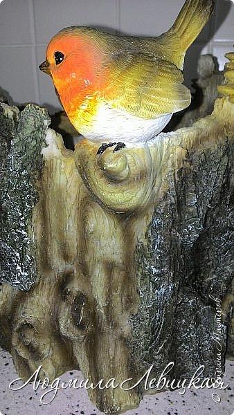 Всем привет! Вот такое кашпо я сделала  для лоджии. Пол-литровую банку оклеила сначала малярным скотчем, а потом на него наклеила при помощи горячего клея кусочки сосновой коры. После покрыла все бесцветным лаком. Получился пенёк. фото 9