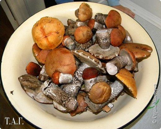 """Вдохновленная вчерашней поездкой за грибами, решила не откладывать в дальний ящик  и """"похвастать"""" добычей тихой охоты. Вечером после работы на машине отправились """"по губы"""" (так в наших местах называют грибы) Перед Вами, дорогие читатели, первый гриб, что нашла. Названий несколько: белый, толстокореник, коровенник, боровик. фото 21"""