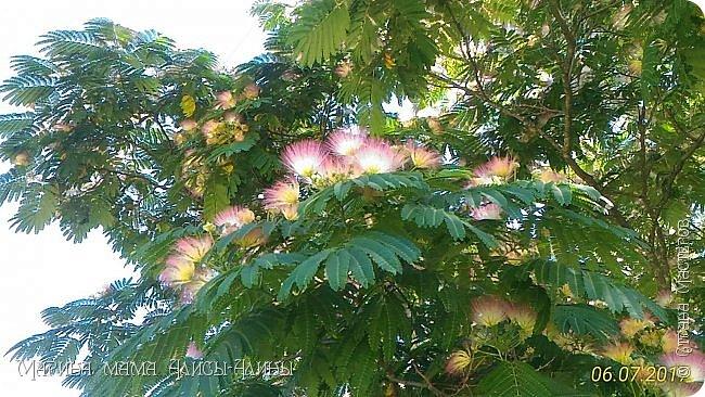 Лето бывает разное... Зелёное и красное, Жаркое, дождливое, Но всегда счастливое!(только что придумалось))) Мой сладкий горошек. фото 42