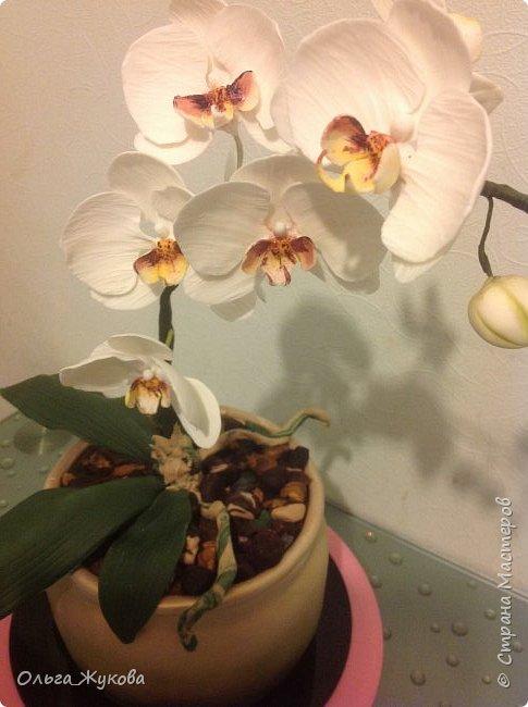 """Всем доброго времени суток! Моя работа- торт """" Орхидея в горшке"""". Тут все съедобное, кроме стебля орхидеи (она из проволоки, обмотанной тейп-лентой))) фото 2"""