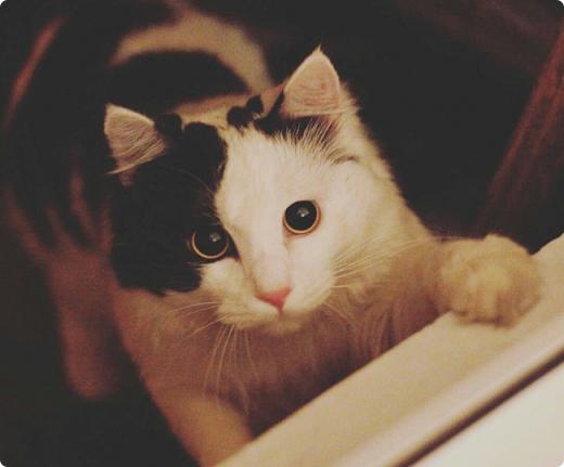 Приветствую вас, мои дорогие соседи! Знакомтесь! Это милое создание - кот Пушка. Гостил он у нас больше месяца по причине отъезда своих хозяев в отпуск.  фото 1