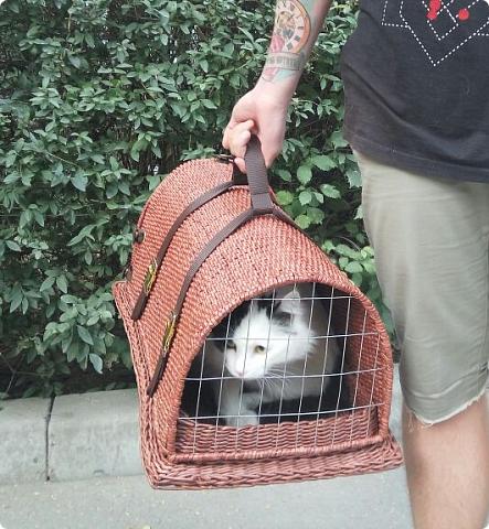 Приветствую вас, мои дорогие соседи! Знакомтесь! Это милое создание - кот Пушка. Гостил он у нас больше месяца по причине отъезда своих хозяев в отпуск.  фото 26