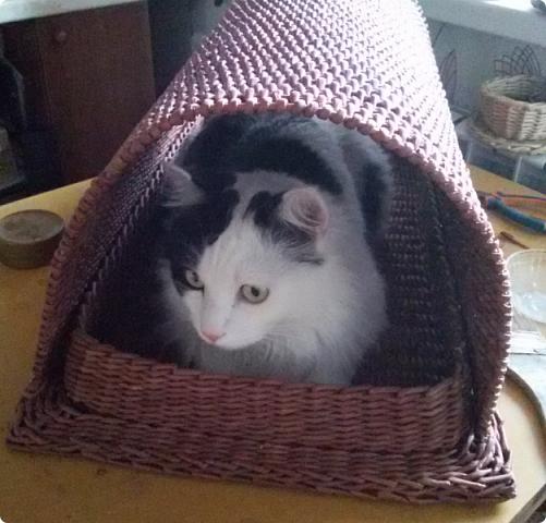 Приветствую вас, мои дорогие соседи! Знакомтесь! Это милое создание - кот Пушка. Гостил он у нас больше месяца по причине отъезда своих хозяев в отпуск.  фото 18